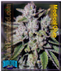 Sin City Medicinal Glue Female 5 Marijuana Seeds